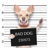 Mugshothund Lizenzfreies Stockfoto