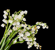 Muguet Blumenstrauß Lizenzfreies Stockfoto