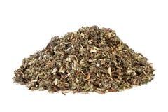 Mugwort Leaf Herb stock photos