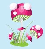 muhamor蘑菇 免版税库存照片
