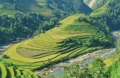 Mui Giay-Stelle und terassenförmig angelegtes Reisfeld der ethnischen Leute h-` Mong lizenzfreies stockbild