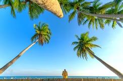 Man sitting reading book beside coconut palm trees at tropical beach. Mui Ne, Vietnam - April 21, 2018: Man sitting reading book beside coconut palm trees at stock image