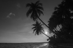 Man sitting reading book beside coconut palm trees at tropical beach. Mui Ne, Vietnam - April 21, 2018: Man sitting reading book beside coconut palm trees at royalty free stock images