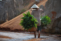 Vietnamese woman carries her herbs Royalty Free Stock Photos