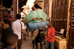 Muilezel in Medina van Fez, Marokko Royalty-vrije Stock Foto's