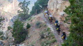 Muilezelruiters op Helder Angel Trail royalty-vrije stock fotografie