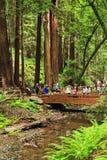 Muir在红木小河的森林桥梁 免版税库存照片