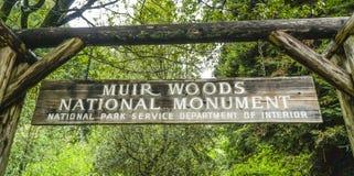 Muir森林国家历史文物在旧金山- MUIR -加利福尼亚- 2017年4月18日 免版税图库摄影