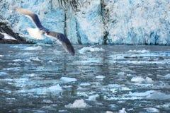 Muir Glacier, Alaska foto de stock royalty free