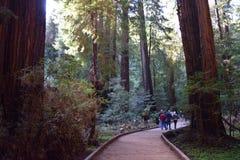 Muir Woods Royalty-vrije Stock Afbeeldingen