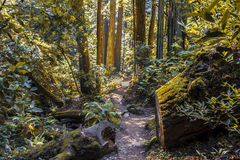 Muir Woods in California del Nord Immagini Stock Libere da Diritti