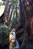 Muir Woods Creek lizenzfreies stockfoto