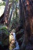 Muir Woods Creek Foto de archivo libre de regalías