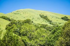 Muir woods forest drive by nature near san francisco Royalty Free Stock Images