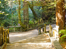 Muir Woods Forest Walking Path stock foto's