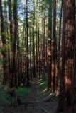 Muir Woods National-monument royalty-vrije stock fotografie