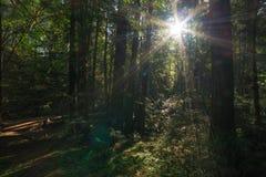 Muir Woods National-monument stock fotografie