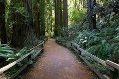 Muir Woods National Monument Foto de archivo libre de regalías