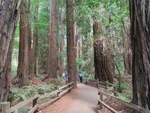 Muir Woods National Monument - 9/18/2017 - promenade de touristes par les arbres géants de séquoia à l'outsid de Muir Woods Natio photos libres de droits