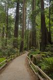 Muir Woods National Monument U.S.A. Immagine Stock Libera da Diritti