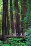 Muir Woods National Monument Visitors Fotografering för Bildbyråer