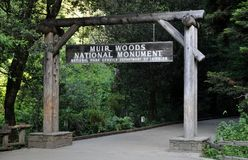 Muir Woods National Monumnet photos libres de droits
