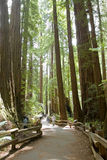 Muir Woods National Park Stock Images