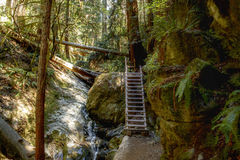 Muir Woods in Nord-Kalifornien stockfoto
