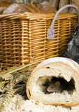 Muis in een brood royalty-vrije stock foto's