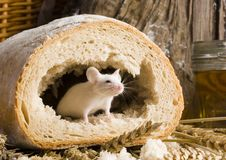Muis in een brood Royalty-vrije Stock Afbeeldingen