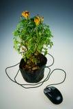 Muis en bloemen stock fotografie