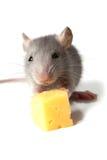 Muis en kaas Stock Afbeeldingen