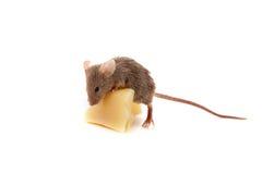 Muis en kaas Stock Afbeelding