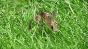 Muis in lang gras