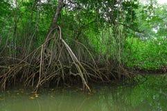 Muisne,厄瓜多尔- 2016年3月16日:Muisne遇见太平洋,热带绿色重的植被的海岛海岸线和 免版税图库摄影
