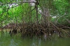 Muisne, Ισημερινός - 16 Μαρτίου 2016: Μικρός ποταμός που ανοίγει στο Ειρηνικό Ωκεανό, τη βαριά τροπικά πράσινα βλάστηση και το νε Στοκ Φωτογραφία