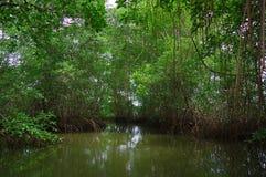 Muisne, Ισημερινός - 16 Μαρτίου 2016: Μικρός ποταμός που ανοίγει στο Ειρηνικό Ωκεανό, τη βαριά τροπικά πράσινα βλάστηση και το νε Στοκ Εικόνα