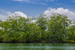 Muisne, Ecuador - March 16, 2016: Beautiful green trees and vegetation, pacific ocean meets island shoreline, as seen. From the water Royalty Free Stock Images