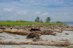 Muisne, Ecuador - March 16, 2016: Nice beach covered in natural waste such as trees and branches, pacific ocean Stock Photos