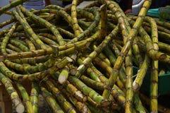 Muisne, Equateur - 16 mars 2016 : Pile de plan rapproché des usines vertes de canne à sucre Image libre de droits