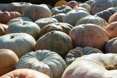 muita abóbora Teste padrão da queda Mercado dos fazendeiros Imagem de Stock Royalty Free
