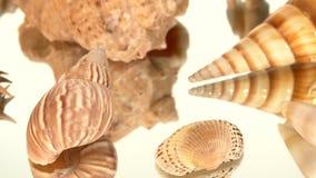Muita luz - shell marrons do mar no branco, rotação filme