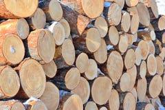 Muita madeira de pinho Imagem de Stock