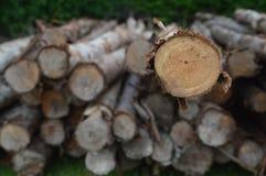 Muita parte da madeira de madeira Foto de Stock