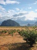 Muita planta na terra seca Foto de Stock Royalty Free