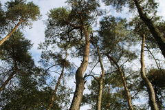 Muitas árvores na floresta com um céu bonito Fotos de Stock Royalty Free