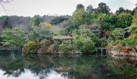 Muitas árvores no parque verde em Osaka, Japão Foto de Stock
