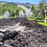 Muitas árvores queimadas no fluxo de lava endurecido em Etna imagem de stock royalty free