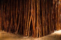 Muitas árvores secas são mostradas na sala fotografia de stock royalty free