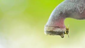 Muitas abelhas que recolhem a água no torneira do gotejamento filme